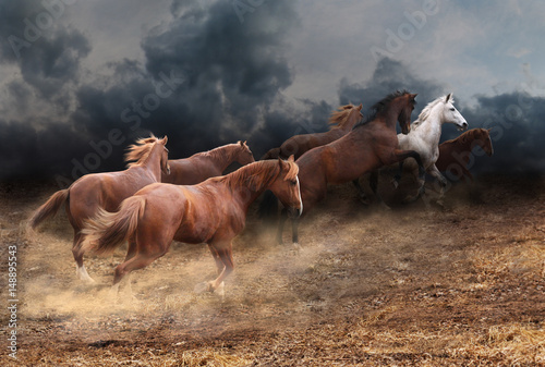 Cuadros en Lienzo Rapid running of the herd of horses across the steppe from a thunderstorm