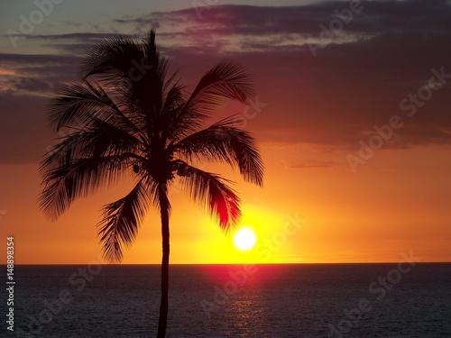 Fototapety, obrazy: Hawaiiam Palm at Sunset