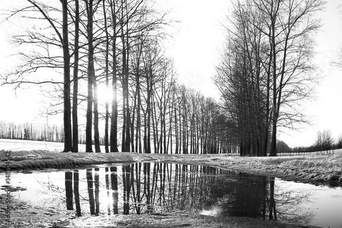 czarno-bialy-obraz-lasu