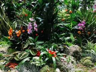 FototapetaColorful Exotic Flowers In Garden