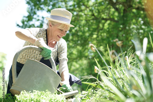 Senior woman gardening on beautiful spring day Wallpaper Mural
