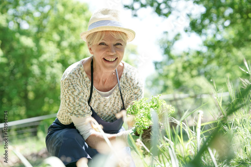Tablou Canvas Senior woman gardening on beautiful spring day
