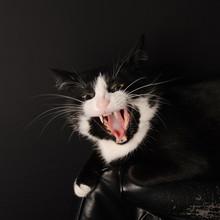 Black And White Cat Predator L...