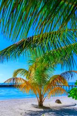 Fototapeta Drzewa Dreamscape Escape On Maldives