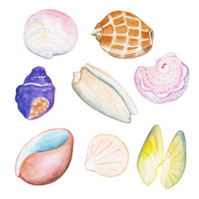 Watercolor Shells On White Background Hand-drawn Illustration.