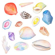 Watercolor Seashells On White Background Hand-drawn Illustration.