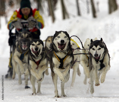 Diemer of Germany speeds with huskies during first dog