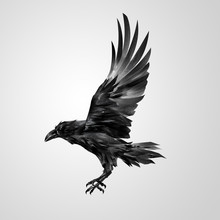 Drawn Realistic Flying Isolated Crow