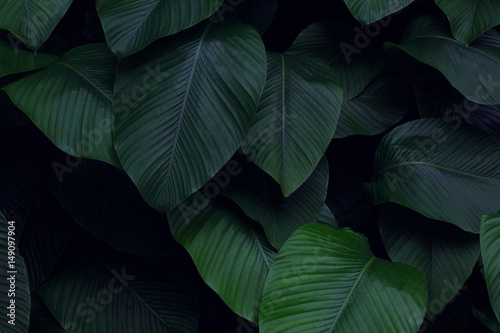 Real tropical leaves background, jungle foliage Wallpaper Mural