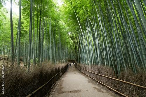 In de dag Zwart Arashiyama