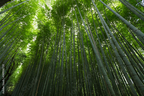 Foto op Canvas Bamboo Bamboo forest with morning sunlight