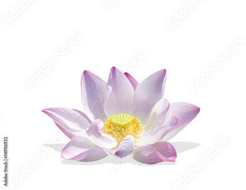 Staande foto Lotusbloem lotus