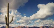 Saguaro Cactus Vast Arizona Open Skies.