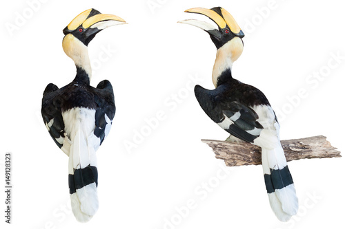Fotografia  hornbill isolated on white background