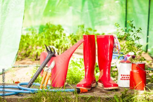 Fototapety, obrazy: Gardening tools outdoor in garden