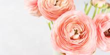 Beautiful Pink Ranunculus Bouq...