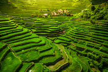 Batad Rice Terraces In Norther...