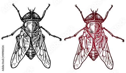 сет насекомое муха