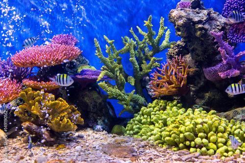 Poster Coral reefs Aquarium fish with coral and aquatic animals