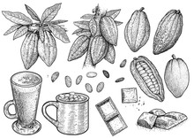 Cocoa Illustration, Drawing, E...