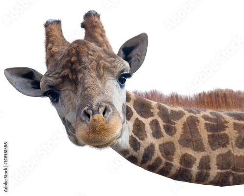 Foto op Canvas Giraffe Giraffe head face