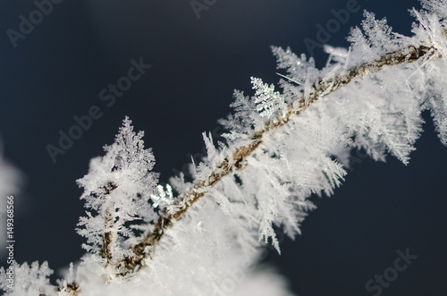 Fotografie, Obraz  Icy Frost Crystals Clinging to the Frozen Winter Foliage