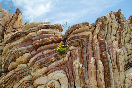 Fotografia Folded limestone with a yellow flower on Crete, Greece