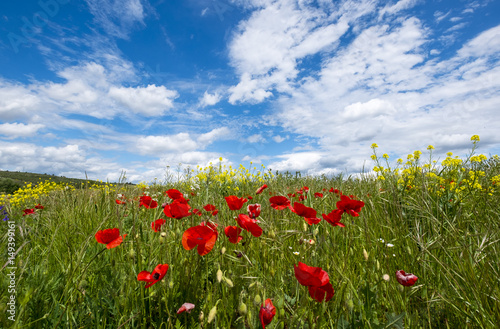 Paysage Avec Le Champ Des Fleurs Sauvages Et De Beaux Nuages Sur Le Ciel Bleu Buy This Stock Photo And Explore Similar Images At Adobe Stock Adobe Stock