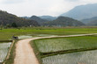 landscape, rice fields in Vietnam