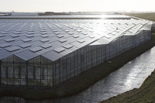 Greenhouses In The Netherlands