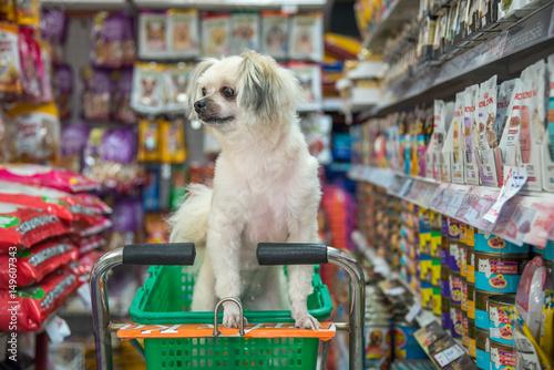 Pies tak słodki czekaj na zwierzaka w sklepie zoologicznym