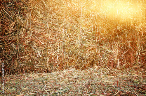 Leinwand Poster dry straw background natural texture.
