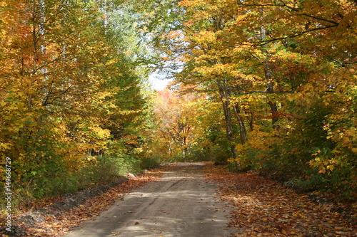 Foto op Canvas Diepbruine Chemin en automne dans une forêt avec les feuilles en couleur