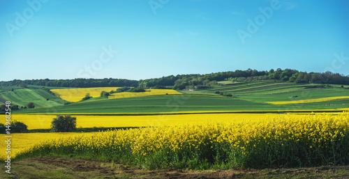 Poster Melon Landschaft mit Felder und blauen Himmel