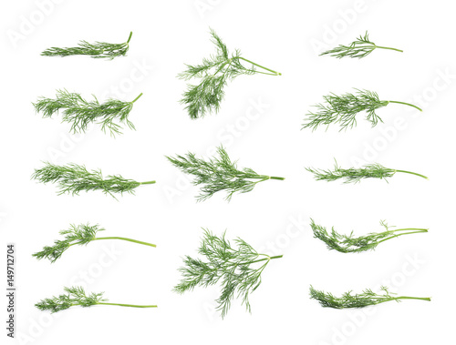 Stampa su Tela Dill herb isolated