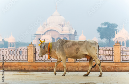 Fotografia, Obraz Kusum Sarovar Govardhan Mandir