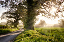 English Country Winding Road W...