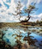 Fototapeta Sawanna - Dwa światy