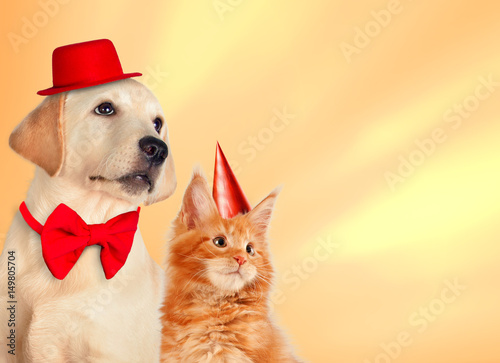 Cat And Dog Together With Birthday Party Hats Maine Coon Kitten