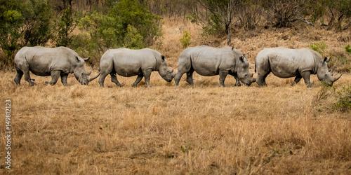 Poster Rhino Rhino Train on the Move