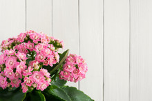 Kalanchoe Flowers On White Wooden Background