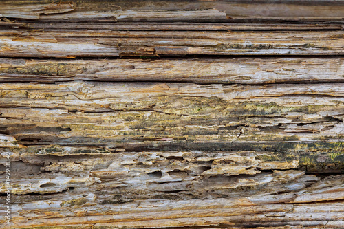 Recess Fitting Wood Texture of wood background closeup