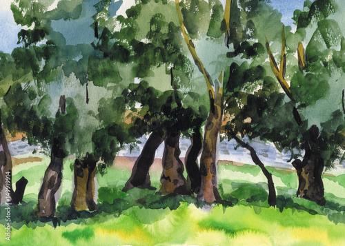 rozrzucanie-wierzb-na-brzegu-rzeki-akwarela-krajobraz