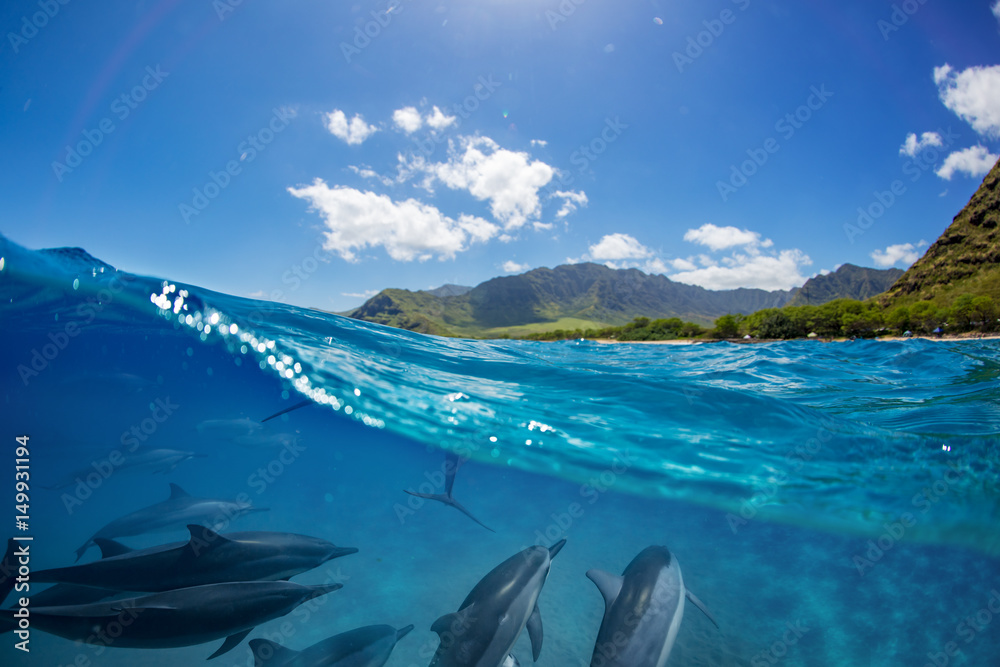 Fototapety, obrazy: Pod of dolphins traveling along shoreline in blue ocean water. Split half-water seascape with green mountains on background
