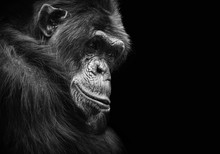 Black And White Animal Portrai...