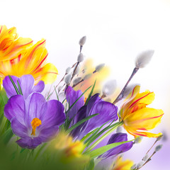 Panel Szklany Podświetlane Tulipany Yellow tulips with willow and crocuses on a white background. Spring Easter card from flowers.