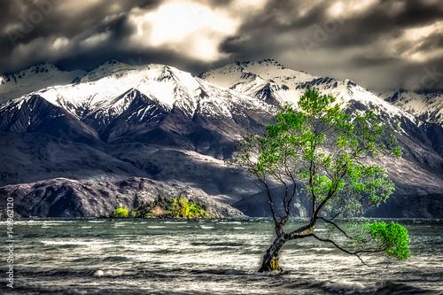 Fotomural THAT Wanaka Tree