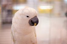 Parrot White Against A White B...