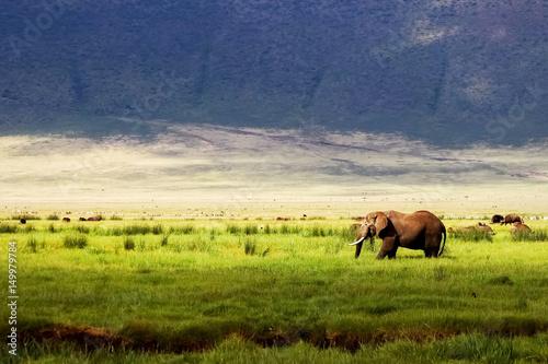 Dziki słoń afrykański w zielonej trawie w obszarze ochrony Ngorongoro na tle gór