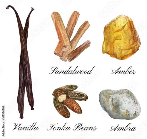 Set of watercolor illustrations of basic perfume notes: vanilla, tonka beans, am Canvas Print